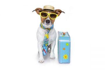https://www.invernessaccommodation.net/properties/dog-friendly-accommodation/